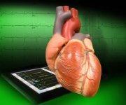 organ repair
